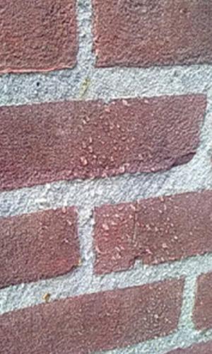 coating stenen muur